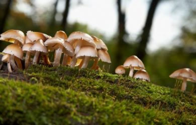 Magic mushrooms – do shrooms show up on drug test