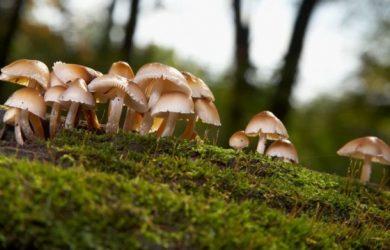 Magic mushrooms – do shrooms show up on drug test