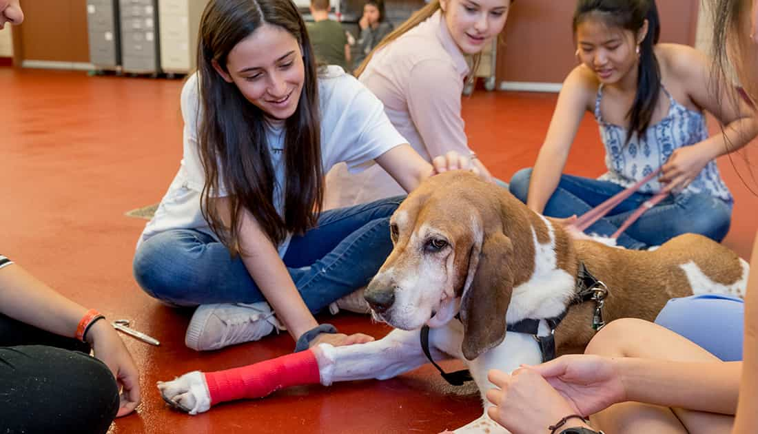What Subjects you will Learn in Veterinary Medicine Program?